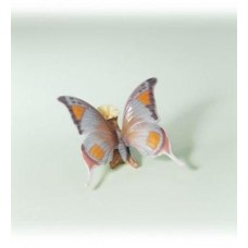 From Natures Palette- Butterfly