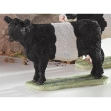 Galloway Cow (Belted)