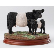Galloway Cow and Calf